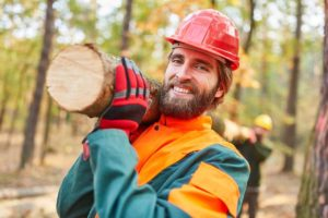 Challenges in the forestry industry