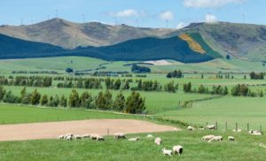 Agricultural land in New Zealand